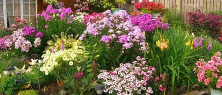 Клумба неприхотливых цветов