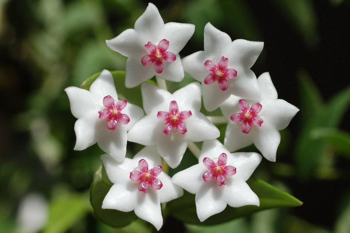 избежание серьезных цветы восковые фото болезнь подкосила этого