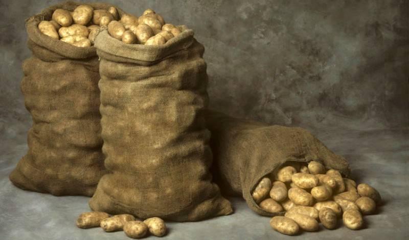 Хранение картофеля: срок, температура, условия, способы