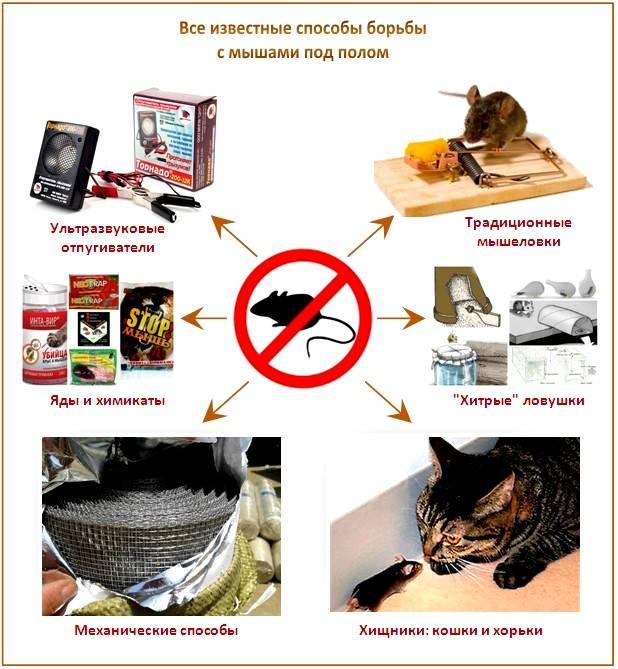 Как избавиться от мышей в доме навсегда — средства и советы