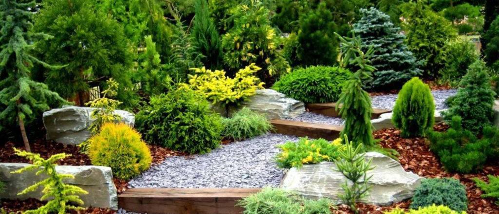 Кипарис и другие растения
