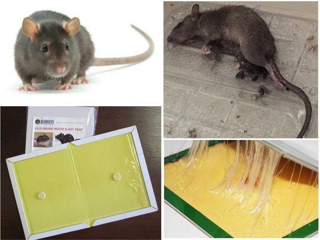 Как убрать клей от мышей с пола