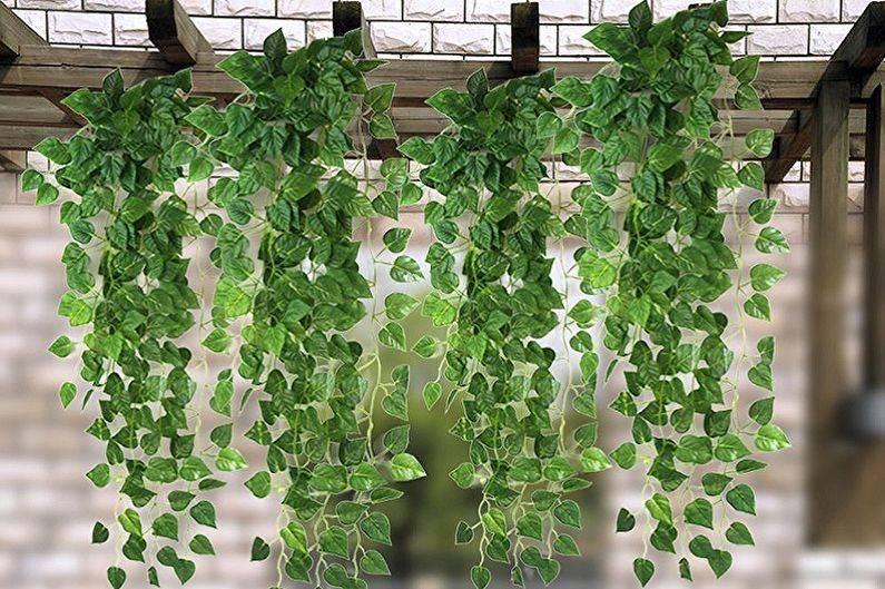 Комнатные цветы плетистые фото и названия