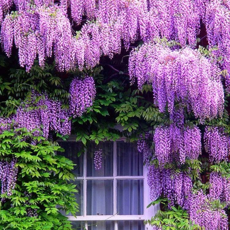 фото популярных вьющихся растений поделитесь своей