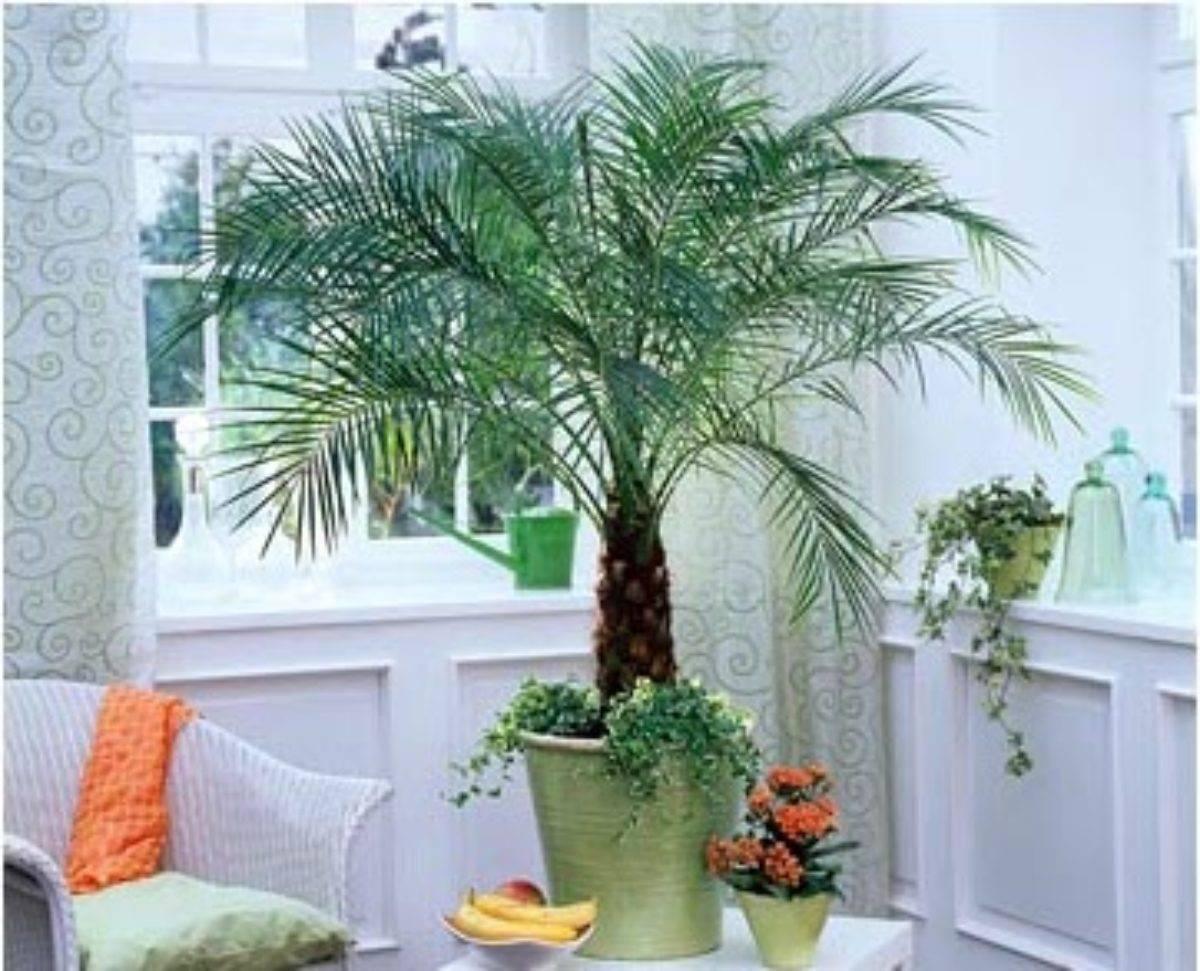 Растения в интерьере - основы фитодизайна