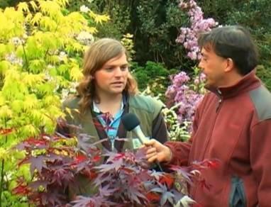Клен размножение черенками — описание способов черенкования, советы опытных садоводов. поэтапная инструкция по размножению