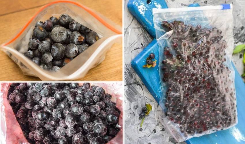 Сколько можно, и как правильно хранить черешню летом и на зиму