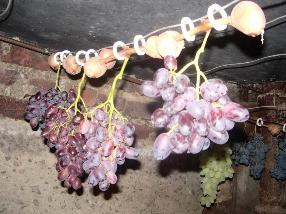 Хранение черенков винограда зимой: как подготовить, чем обработать и где хранить до весны