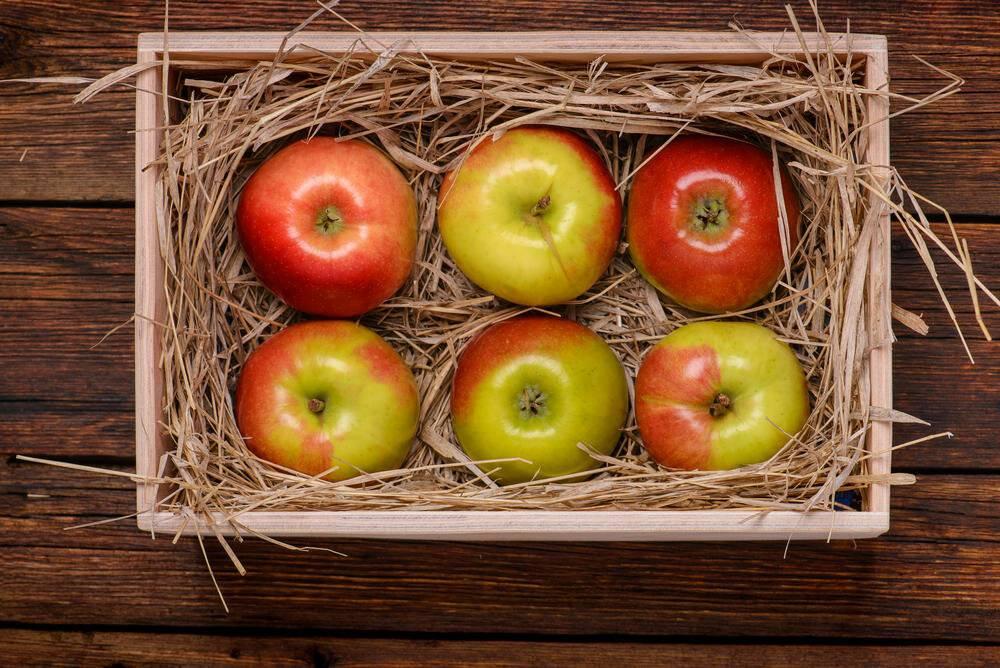 Срок и условия хранение сушеных яблокв квартире, доме, на балконе