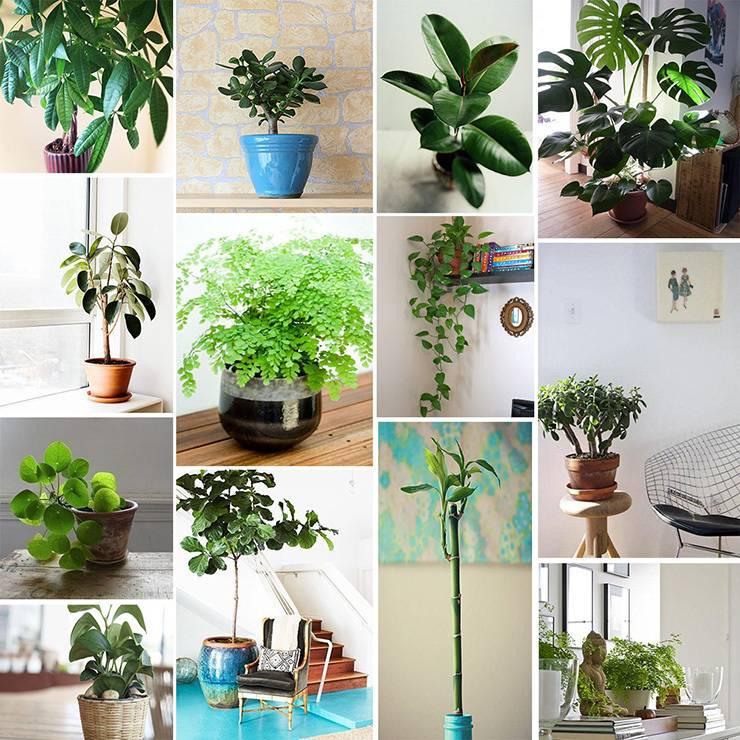 вао, комнатные растения по фен шуй фото самое важное, что