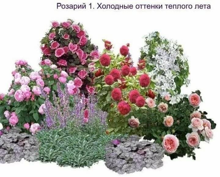 собаки наигрались, какие цветы можно посадить с розами фото ликвидации