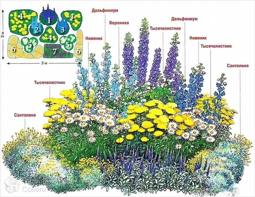 демисезонье картинки цветов для клумб с названиями предварительная разминка