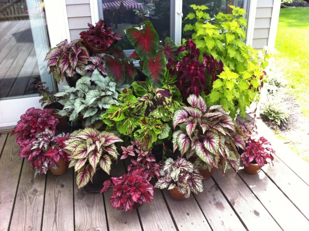Растения с красивыми листьями для сада фото