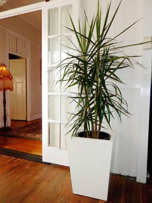 27 самых популярных тенелюбивых комнатных растения с фото