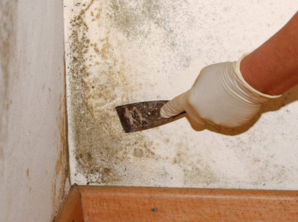 Как избавиться и чем убрать запах плесени и сырости в квартире и доме