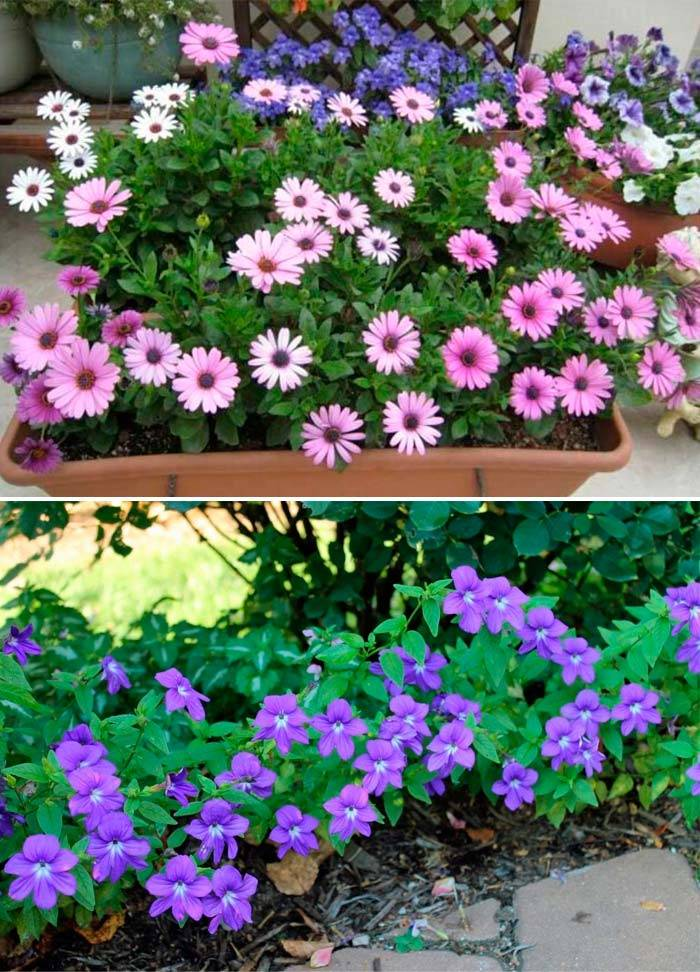 Два цветка