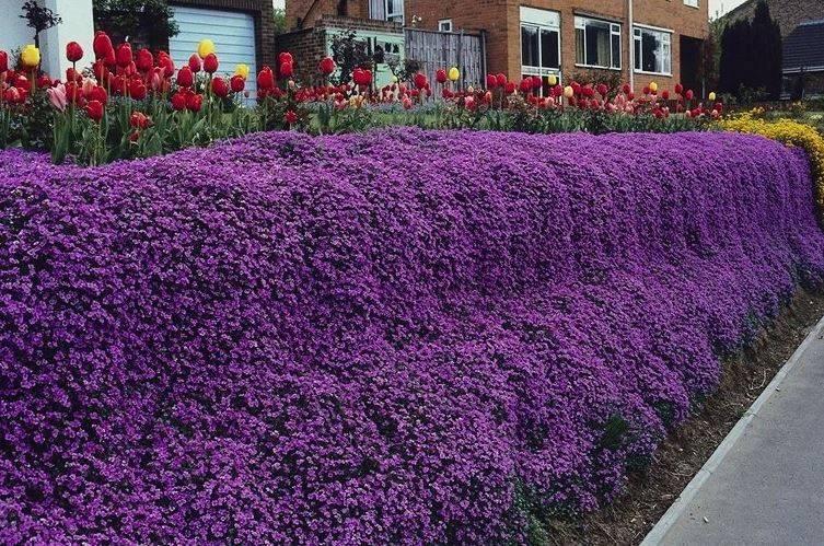 Цветущая изгородь