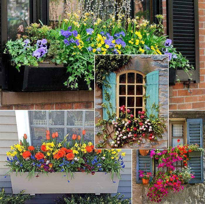 Цветы на окнах и ставнях