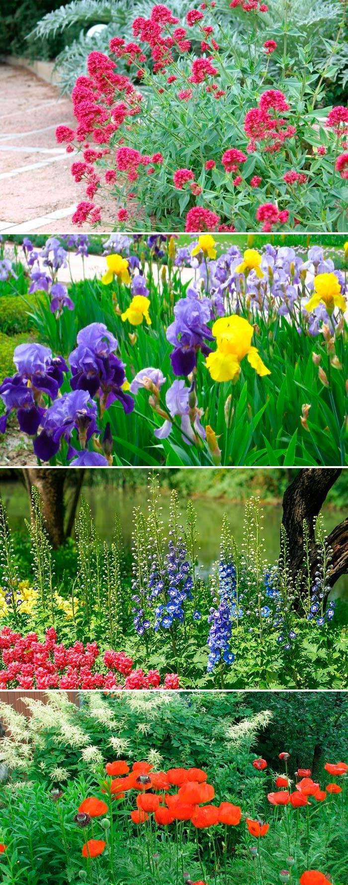 Весенне-летние цветы