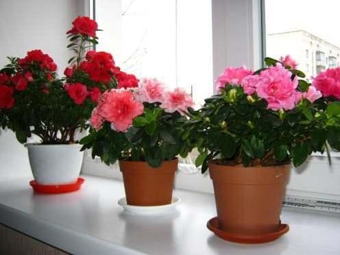 Трое цветов