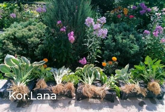 Как уберечь растущую пряность: болезни и вредители базилика, а также борьба с ними