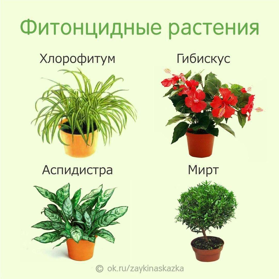 Комнатные цветы с картинками и названиями