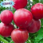 Красная астильба: сорта и правила их выращивания