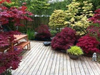 Низкорослые деревья для озеленения ландшафта: какие выбрать?