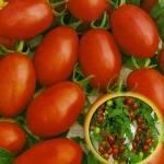 Красная лапчатка: популярные сорта, выращивание и уход