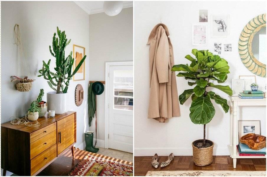 Комнатные растения и красивые домашние цветы