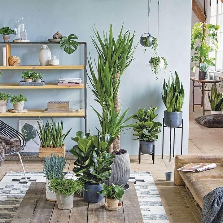 серия гардин, фото квартир с растениями напоминает две