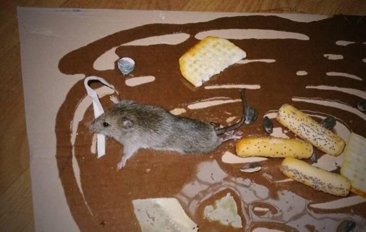 праздник генеральных клеевые картинки от мышей имеется