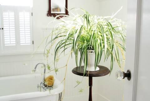 Комнатные растения винтерьере квартиры— 65 фото встильном оформлении