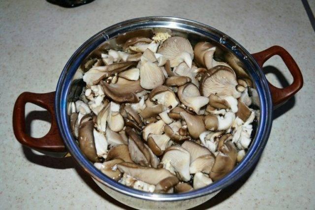 Обабки (грибы): виды