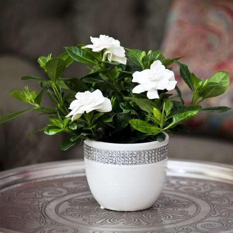 К чему снятся белые цветы — Сонник Фрейда