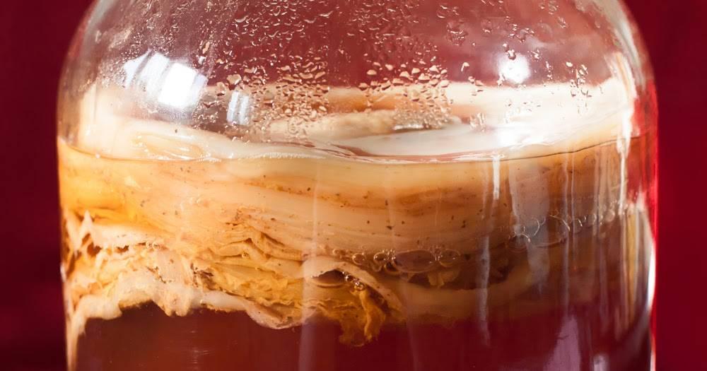 образование чайного гриба в картинках