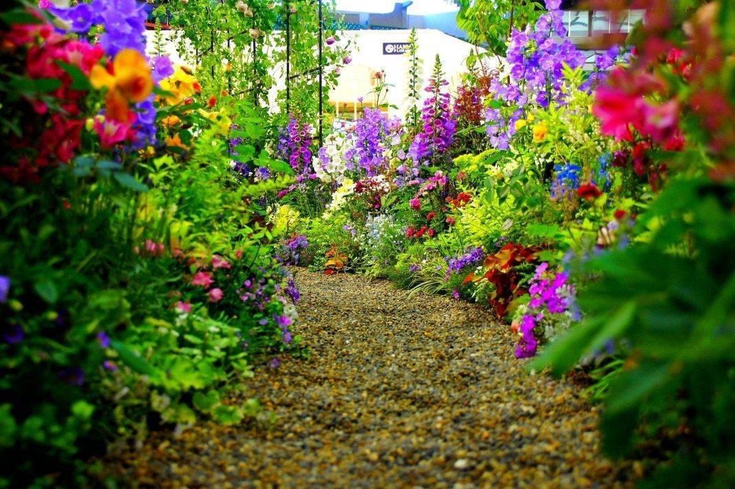 Цветы вдоль дорожки