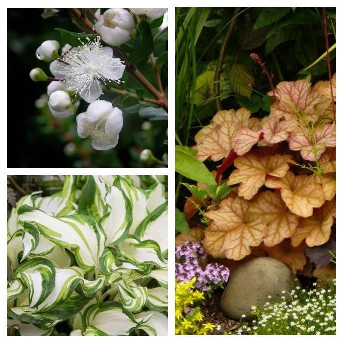 Три растения