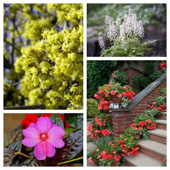 Тиарелла и другие цветы