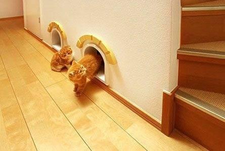 Креативное решение для кошек