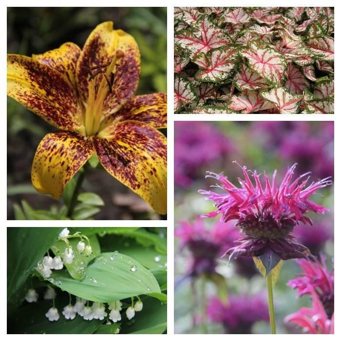 Ландыши и другие цветы