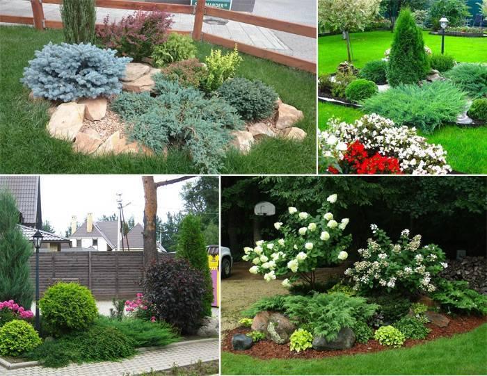 Можжевельник с разными растениями