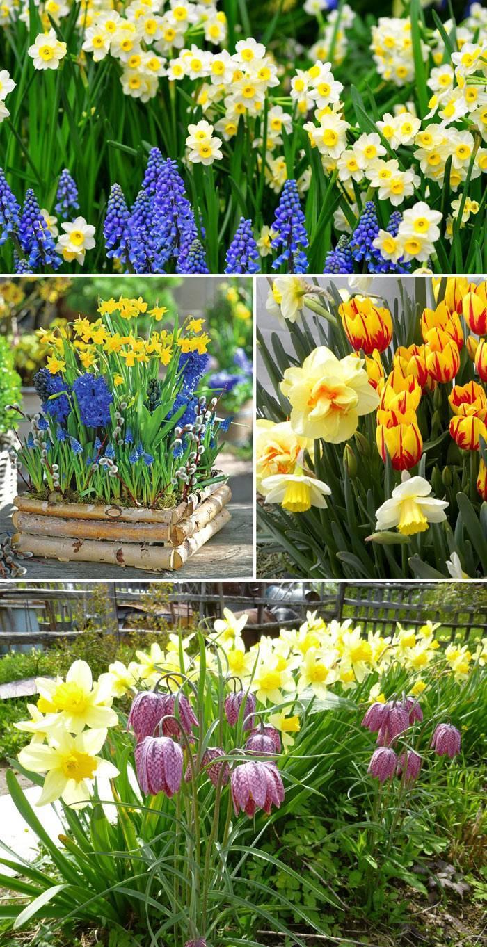 Нарциссы и другие цветы