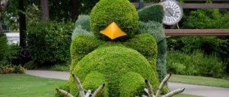 Птица из кустиков
