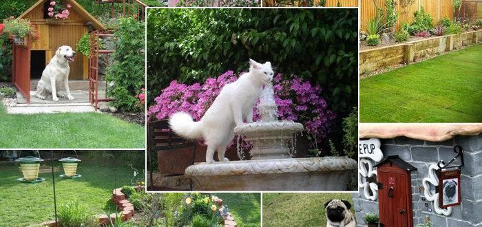 Сад для кошек и собак