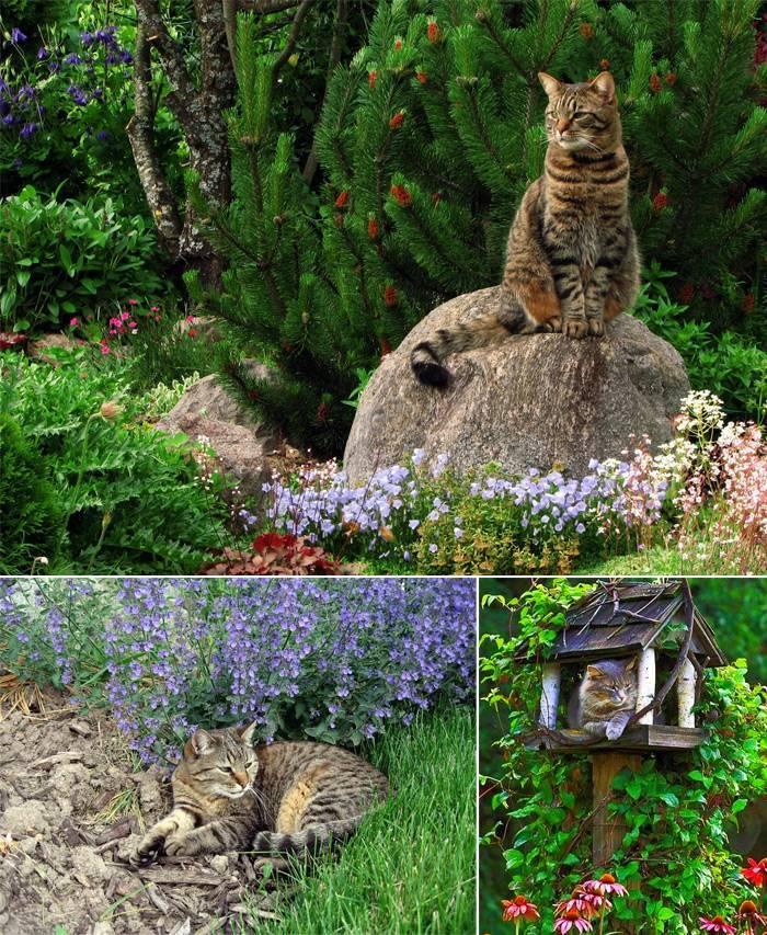 Кошки в саду