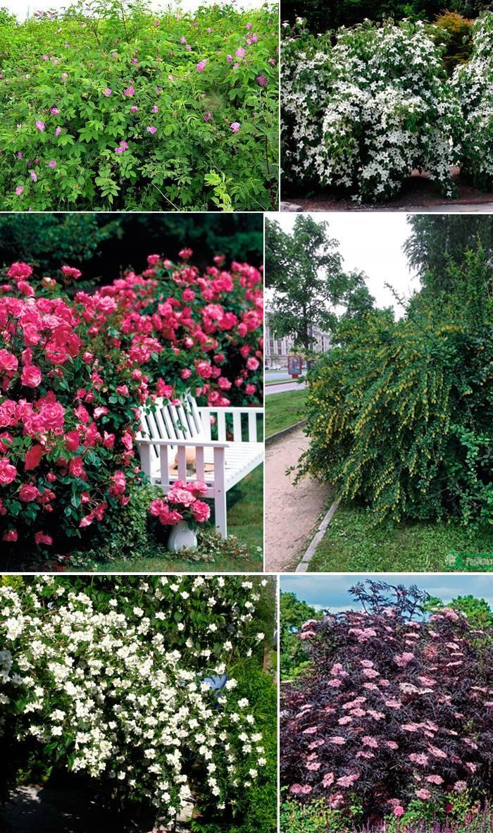 Цветы и листья в изгороди
